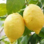 Un'amicizia al profumo di limone