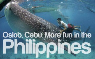 Oslob, Cebu Whale Sharks