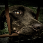 Cani e canetti, a Palermo c'è la Francy