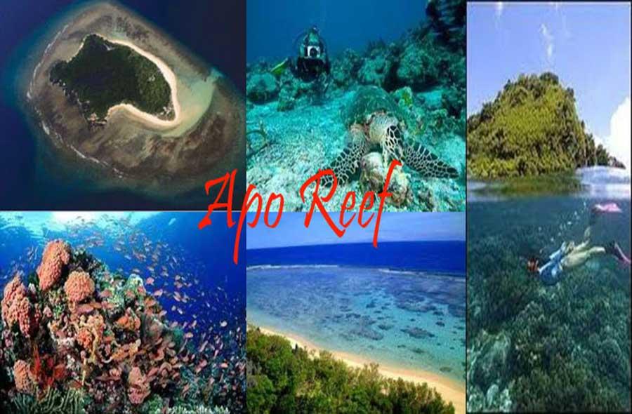 goedkoop worden maat 40 wereldwijd verkocht Apo Reef Natural Park - I segreti di Matilde