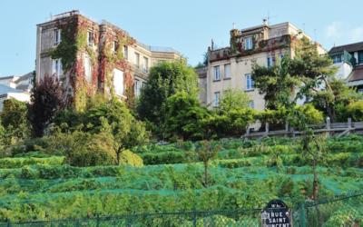 Montmartre in bottiglia