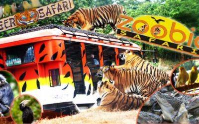 Zoobic Safari, Philippines