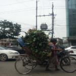 Il rickshaw