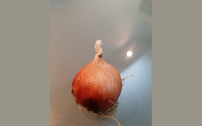 Delle cipolle e altri piccoli problemi
