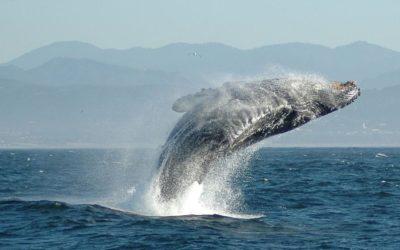 LA MAGIA DELL' AMORE PER LA NATURA – La balena e i pescatori coraggiosi nel mare di Oman